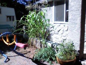 Max's garden